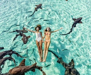 summer, ocean, and shark image