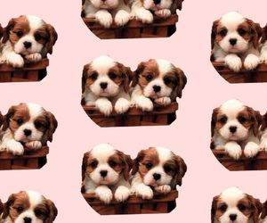 dog, wallpaper, and dogs image