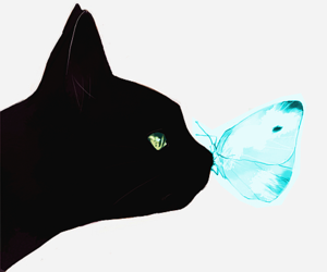 blue, butterfly, and cat image