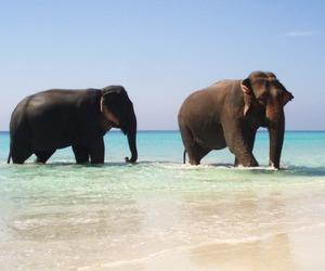 animals, elefante, and world image