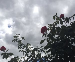 rose, aesthetic, and clouds image