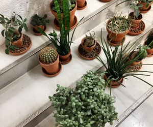 aesthetic, cactus, and cool image