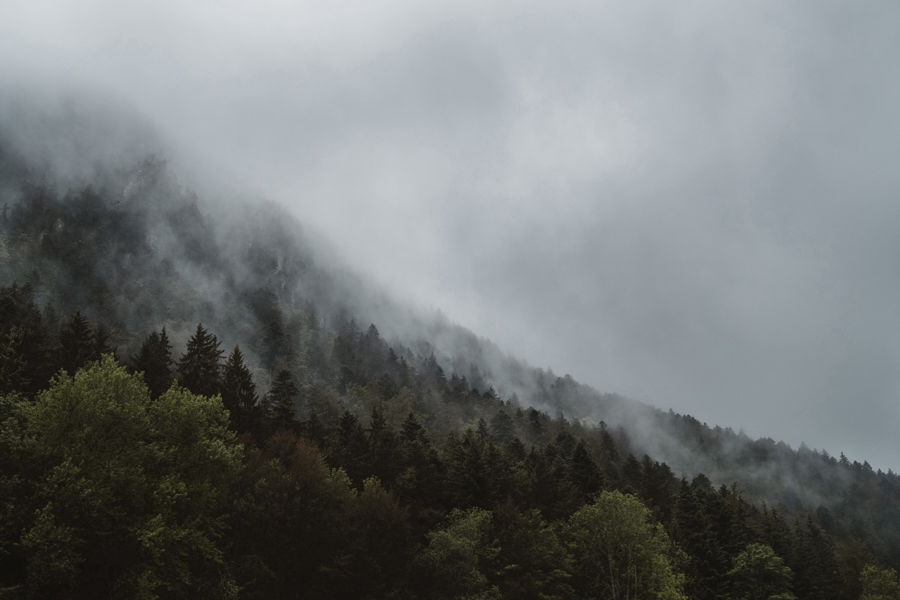 clouds, fog, and forest image