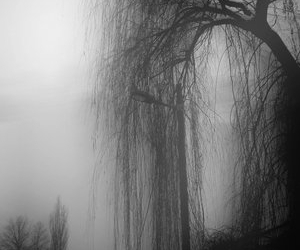 fog, tree, and willow tree image