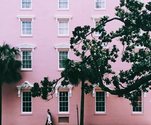pink, tree, and architecture image