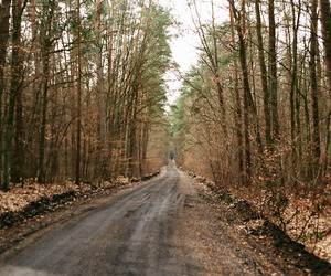 analog, Film Photography, and forest image
