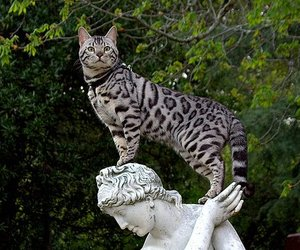 cat and statue image