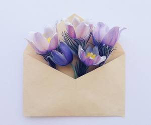 flowers, purple, and Letter image