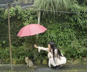 cat, rain, and girl image