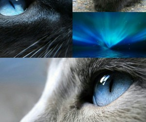 cat, cats, and erin hunter image