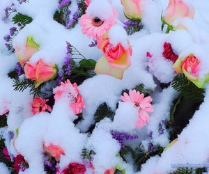 beautiful, ice, and pink image