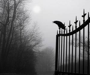 black and white, foggy, and vampire image