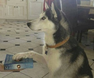 dog, got, and game of thrones image
