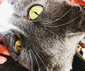 cat, eyes, and mrr image
