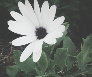 fade, floral, and flower image