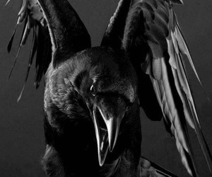 black, crow, and Darkness image