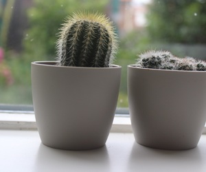 beautiful, cactus, and plants image