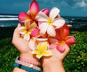 beach, flower, and travel image