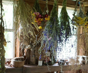 witch, wicca, and herbs image