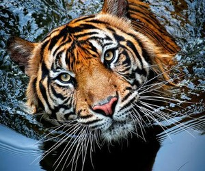 agua, Animales, and beauty image