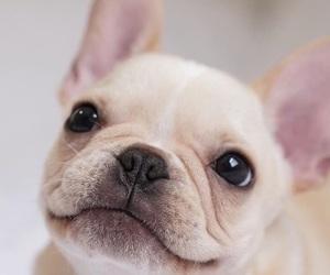 animals, bulldog, and dog image