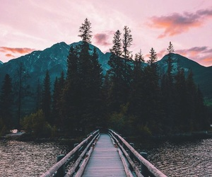nature, photography, and bridge image
