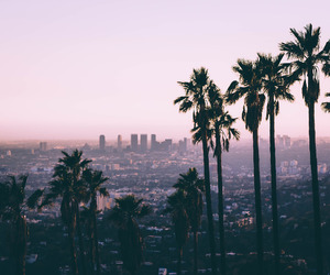 buildings, city, and palmtrees image