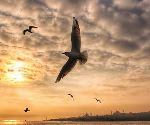 bird, istanbul, and sky image
