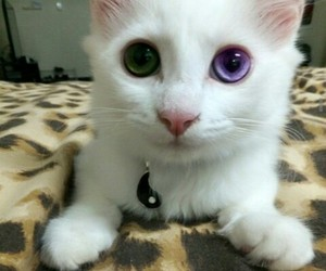 adorable, eyes, and green image