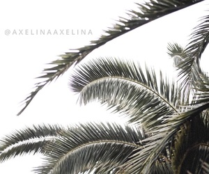 leaves, palm, and palmtree image