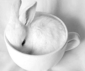 aesthetic, animal, and rabbit image