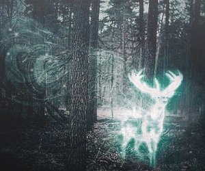 aesthetic, harry potter, and patronus image