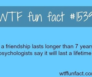 friendship and fact image