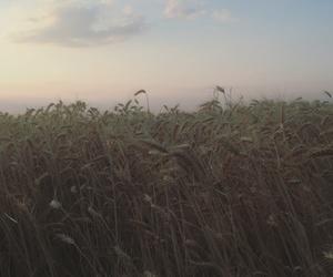 landscape, sunset, and tumbrl image