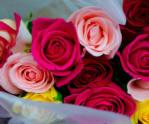 flower, gorgeous, and roses image