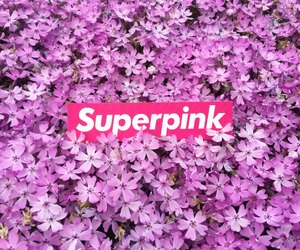 background, flower, and supreme image