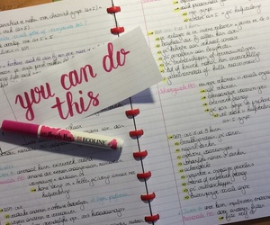 college, exams, and pink image