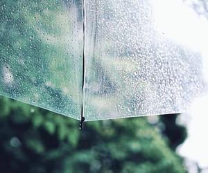 autumn, rain, and raindrops image