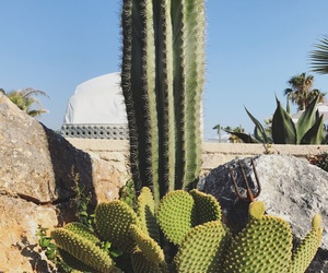cactus, Greece, and cute image