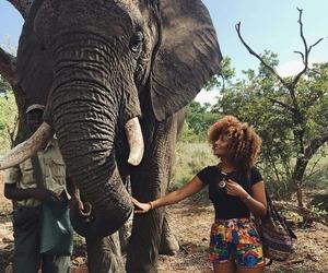 elephant and travel image