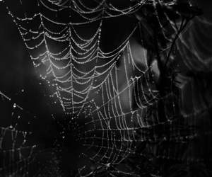dark, Darkness, and spider web image