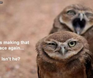 owl, funny, and lol image