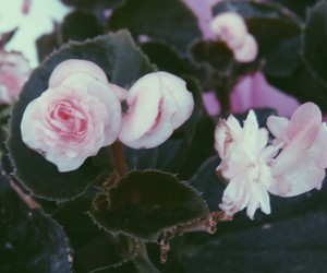 blue, pink, and flowers image