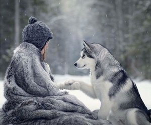 wolf, winter, and nature image