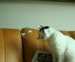 bubble, cat, and style image