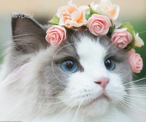 cat, crown, and kitty image