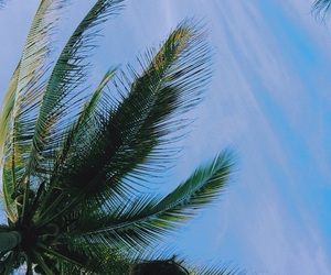 beach, palms, and playa image