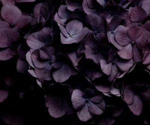 flowers, purple, and dark image