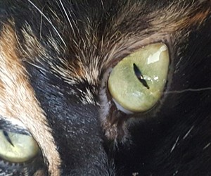 cat, green, and pet image