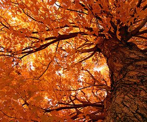 tree, autumn, and photography image